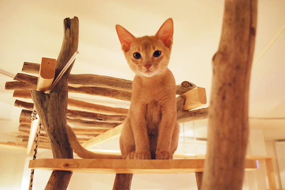 Cat Room こるね